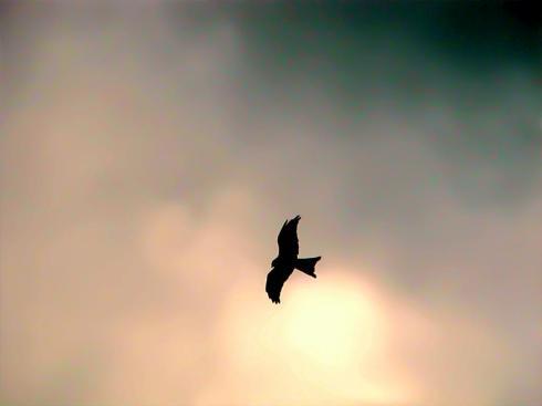 Eagle Above